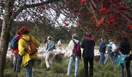 Wandel mee met de Biesbosch schaapskudde: natuurtheatervoorstelling KUDDE