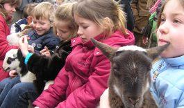 2e Paasdag Lammetjesdag in Hollandse Biesbosch