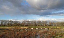 Wat vind jij van de Nieuwe Dordtse Biesbosch?
