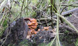 Afsluiting deel recreatiebos Hollandse Biesbosch door boomsterfte