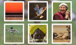 """Foto-expositie """"Een boswachter buiten 'zijn' territorium"""""""