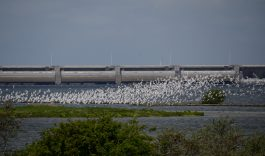Na 47 jaar weer ruimte voor haring en zalm in de delta