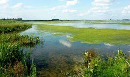 25 jaar Nationaal Park De Biesbosch