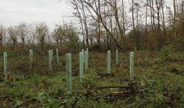 Herplant bomen mede mogelijk gemaakt door Tuijtel